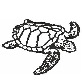 Schildgröte